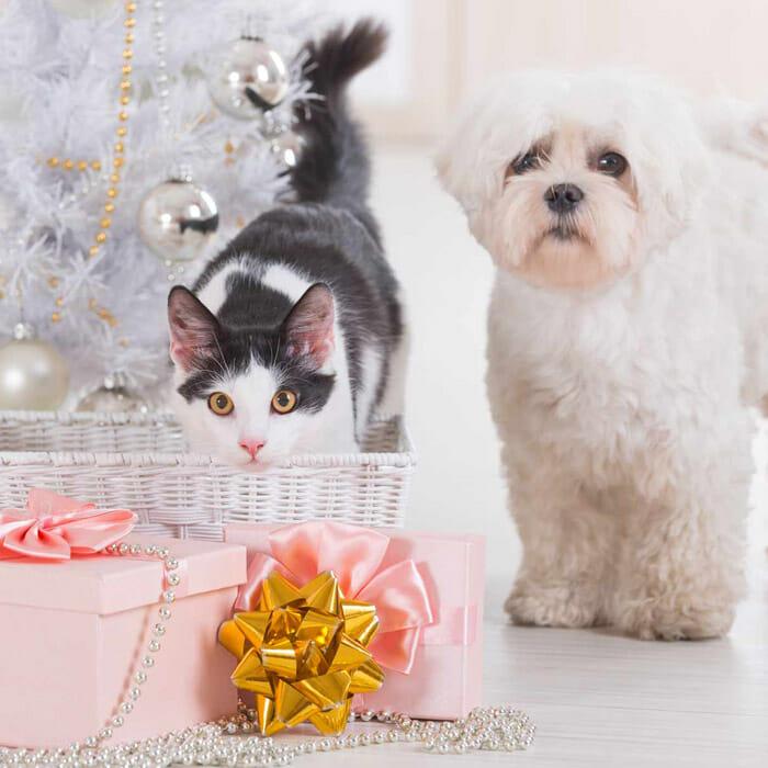 Cadeau pour chat et pour chien